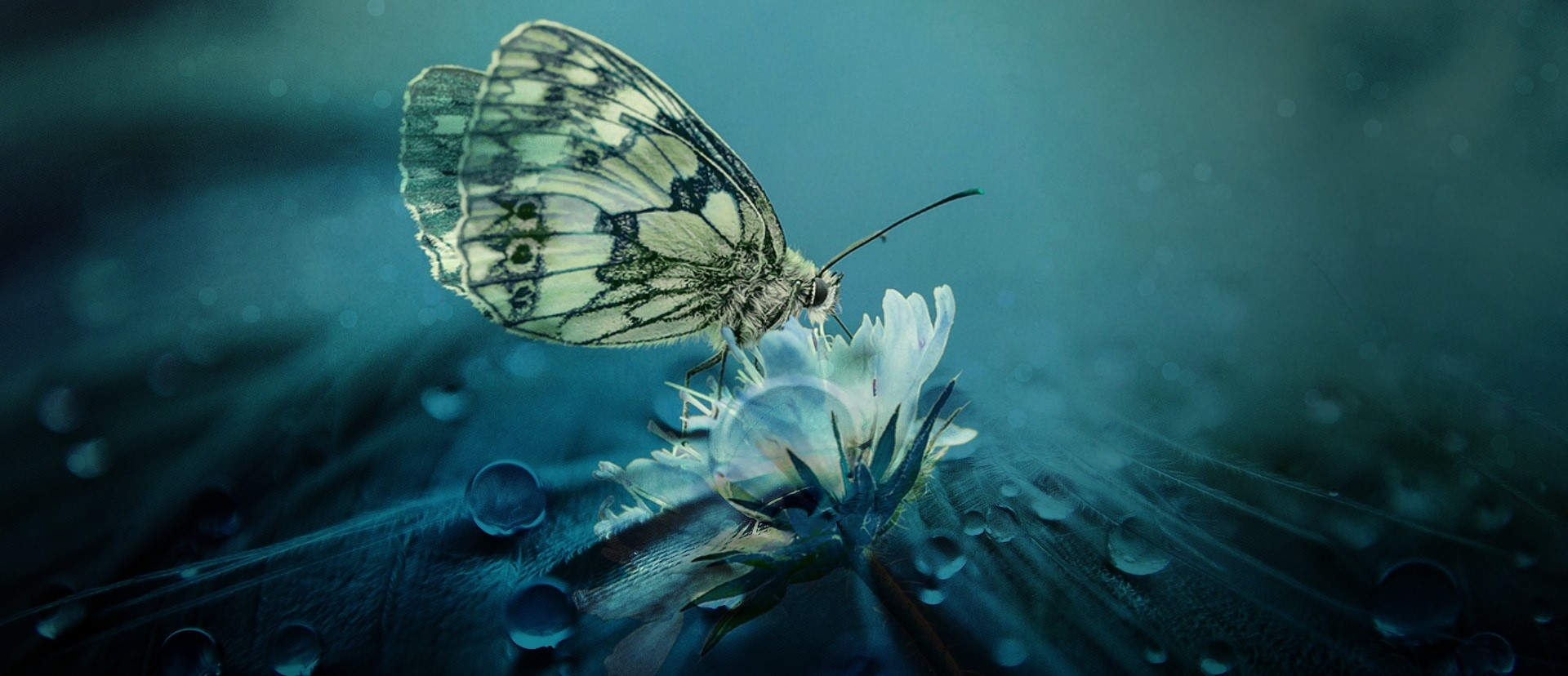 A photo of a marbled white butterfly