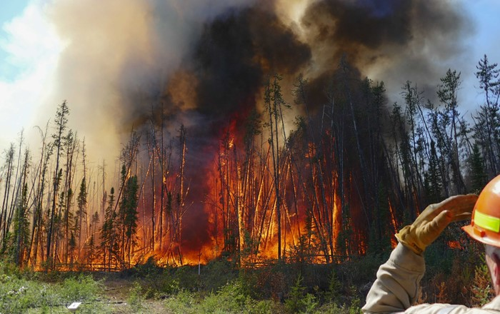 New study shows charred vegetation remains help to lessen overall carbon emission from wildfires