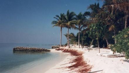 Image 5 Maldives