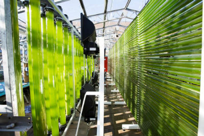 Algal Cultivation facility at Swansea University.