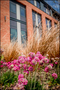 Bay Campus landscaping 2