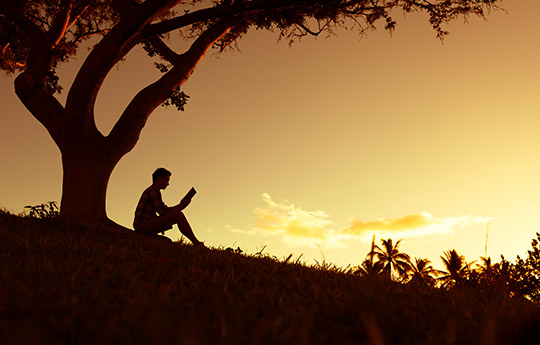 person sitting under a tree reading at sunset