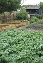 Image of allotment for 'Some Fathers' poem