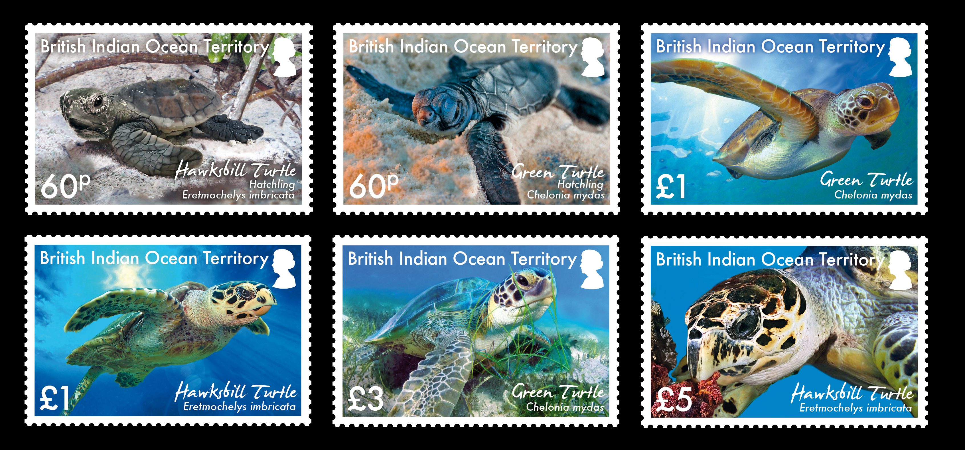 Set of turtle stamps
