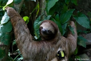 Becky Cliffe sloth backpack