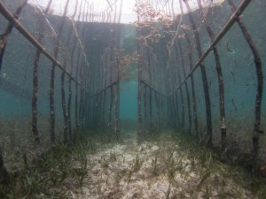 Seagrass Fences