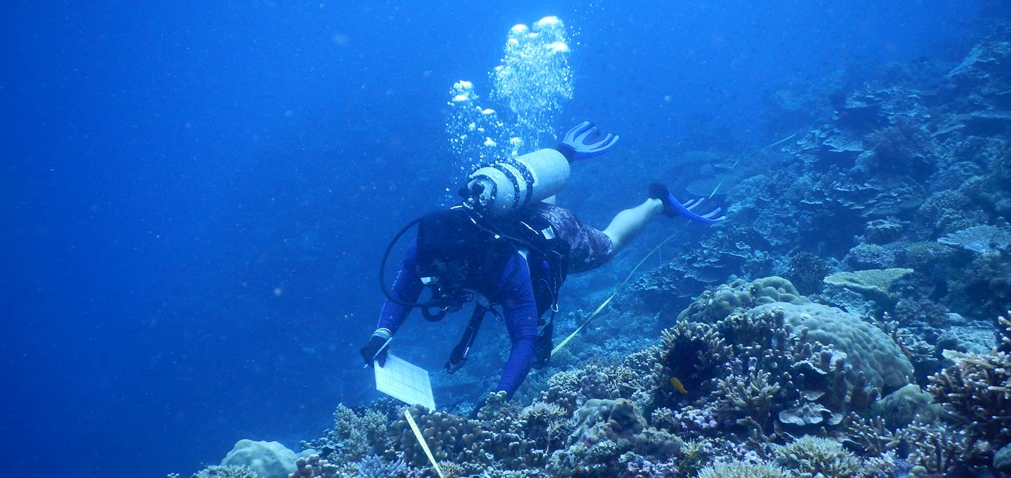 Researcher is swimming underwater to conduct a coral reef survey.