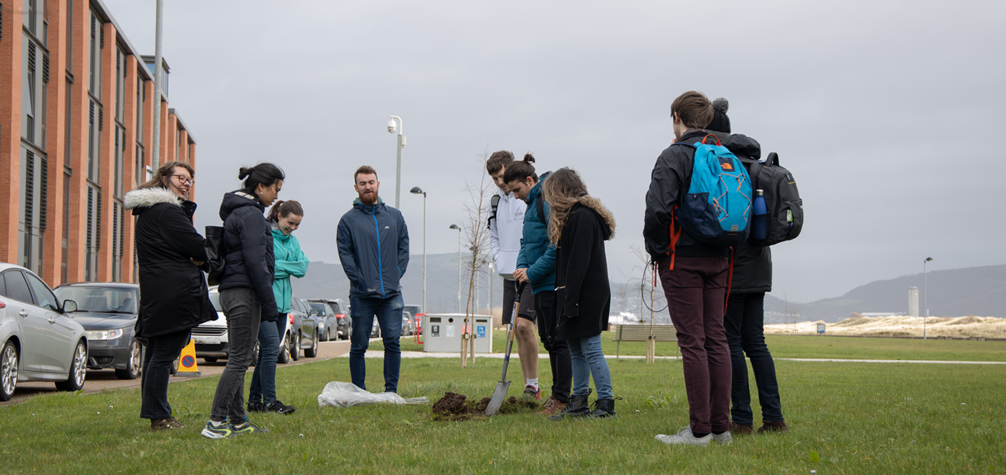 Staff at Swansea University's Bay Campus helping to plant the centenary oak saplings.