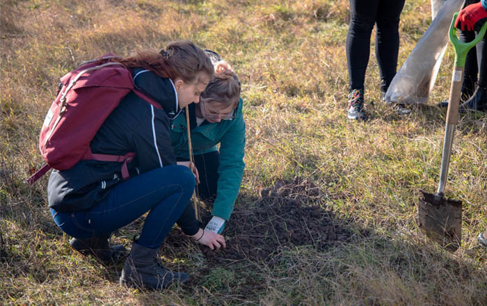 Staff at Swansea University's Bay Campus helping to plant the centenary oak saplings