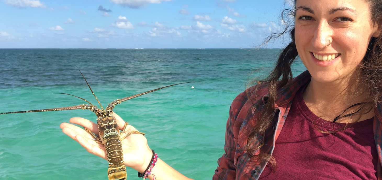 Researcher Dr Charlotte Eve Davies about to release a lobster back into the ocean: the study showed an association between virus prevalence and habitat