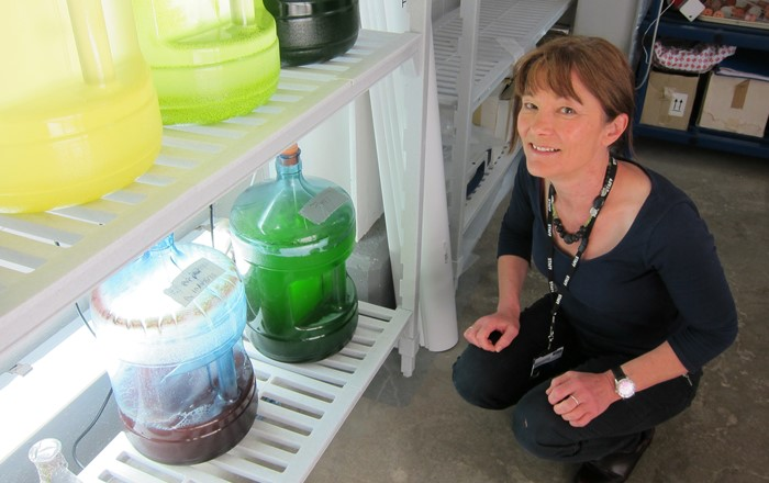 Professor Carole Llewellyn who is leading a Swansea University project exploring how to use algae to create the next generation of sunscreens.