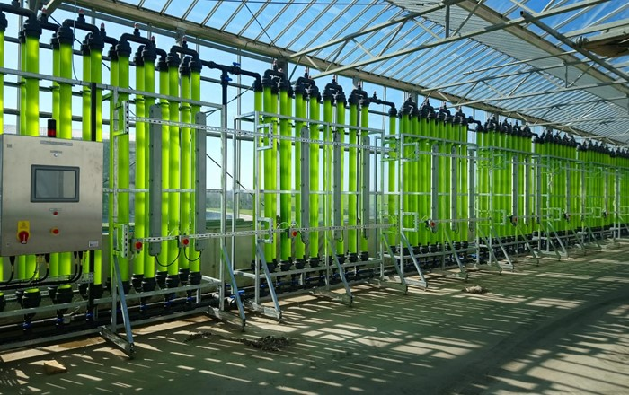 New study shows how microalgae could be crucial to circular economy