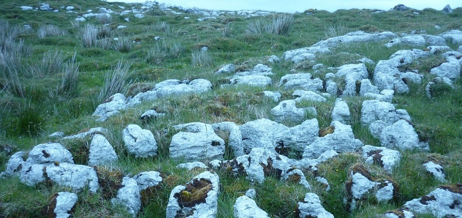 The Traditional Medicine Group discovered that soil used in ancient Irish folk medicine in the West Fermanagh scarplands contains several species of these antibiotic producing organisms