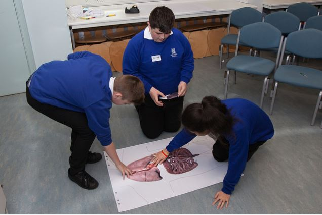Keystage 3 pupils take part in a biology activity