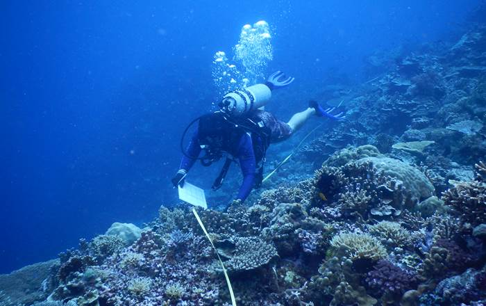 Research finds positive community action can help coral reef health